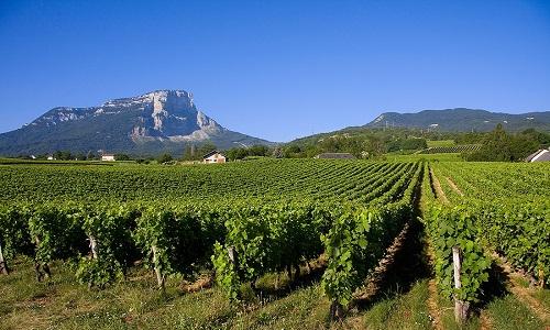 taxi le vignoble de Savoie